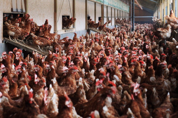 Free Range「Organic Farms Likely To Benefit From Dioxin Scandal」:写真・画像(8)[壁紙.com]