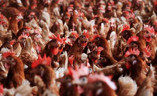 Free Range「Organic Farms Likely To Benefit From Dioxin Scandal」:写真・画像(9)[壁紙.com]