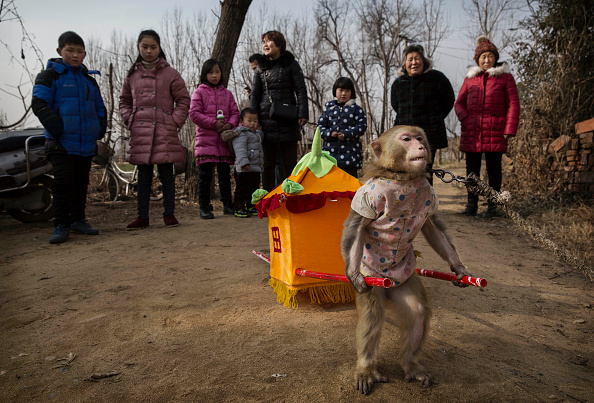 Kevin Frayer「Chinese New Year Boosts Monkey Business for Villagers」:写真・画像(15)[壁紙.com]