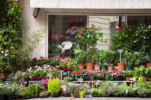 City Life「Flower Shop in Paris」:スマホ壁紙(19)