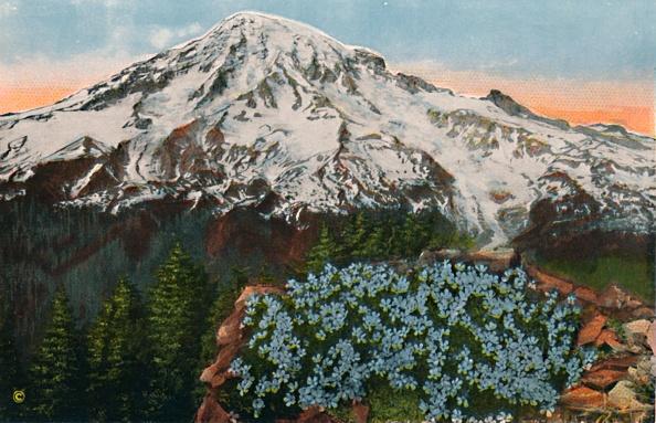 Snowcapped Mountain「The Phlox On Mount Rainier」:写真・画像(9)[壁紙.com]