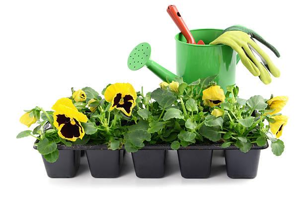 seedling pansy Flower in pot with gardening trowel and gloves:スマホ壁紙(壁紙.com)