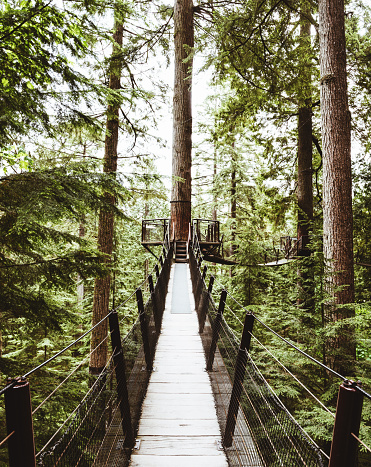 Footpath「bridge in the forest in british columbia」:スマホ壁紙(16)
