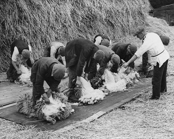 Advice「Shearing Class」:写真・画像(8)[壁紙.com]