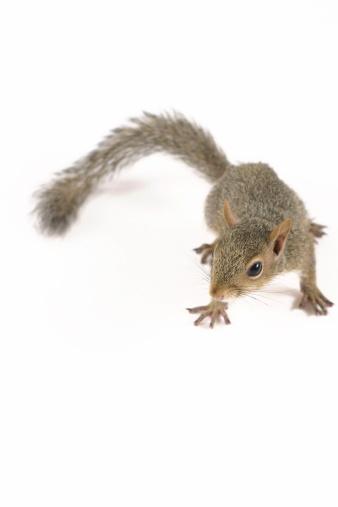 Squirrel「かわいいリス IV」:スマホ壁紙(15)