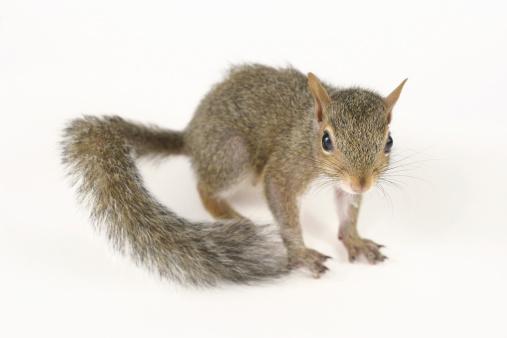 Squirrel「かわいいリス II」:スマホ壁紙(6)