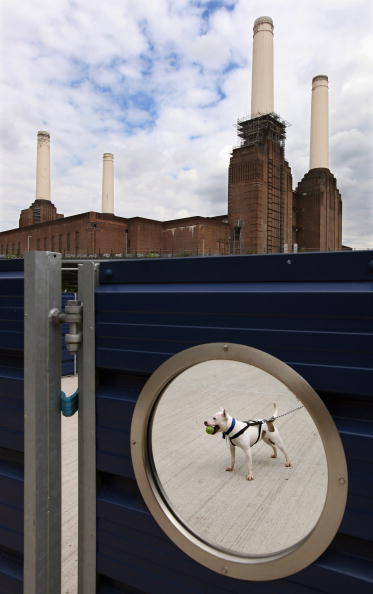 Waiting「Battersea Dogs Home Attempt To Rehome Abandoned And Stray Dogs」:写真・画像(4)[壁紙.com]