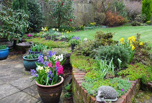 Flower Pot「Early spring flowers in domestic garden, England.」:スマホ壁紙(12)