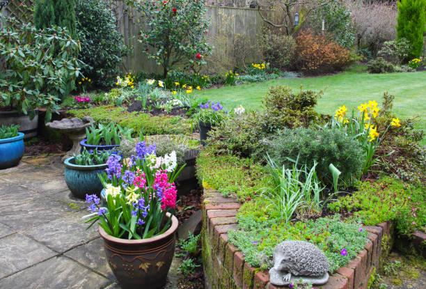 Early spring flowers in domestic garden, England.:スマホ壁紙(壁紙.com)
