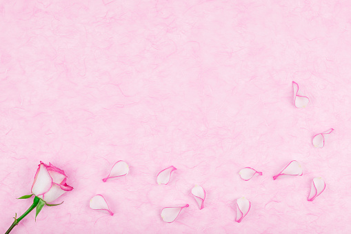 薔薇「Rose pedals on pink tissue paper, copy space」:スマホ壁紙(3)