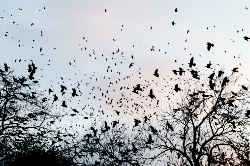 Horror「crows gathering at dusk in bare winter twilight trees」:スマホ壁紙(1)