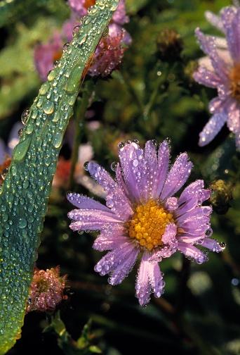 Choosing「Dew drops on flower blooms」:スマホ壁紙(3)