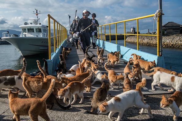 Offbeat「Japan's Island of Cats」:写真・画像(14)[壁紙.com]