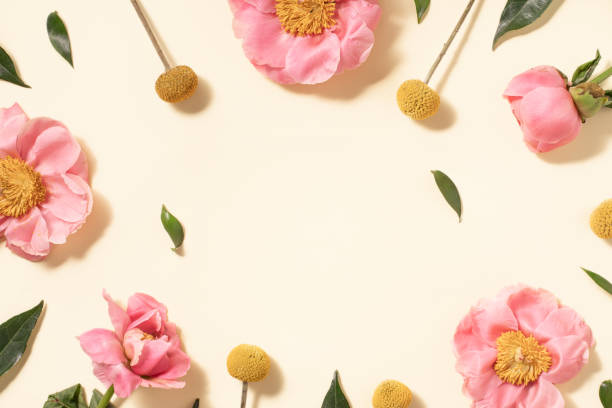 Summer flower flat lay on yellow background. Top view composition.:スマホ壁紙(壁紙.com)