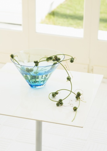 Natural Condition「Plants and a glass bowl」:スマホ壁紙(9)