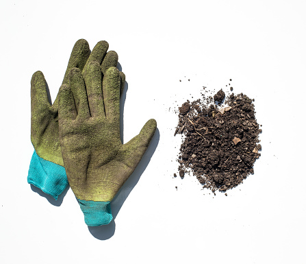 Protective Glove「Plants and roots photographed on a white background.」:スマホ壁紙(11)