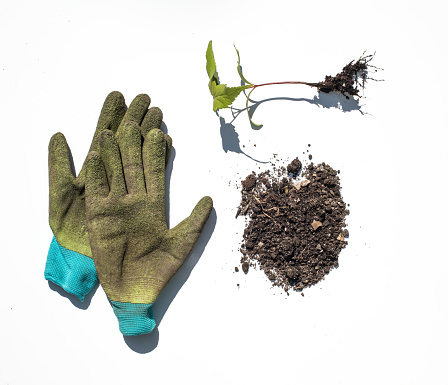 Protective Glove「Plants and roots photographed on a white background.」:スマホ壁紙(2)