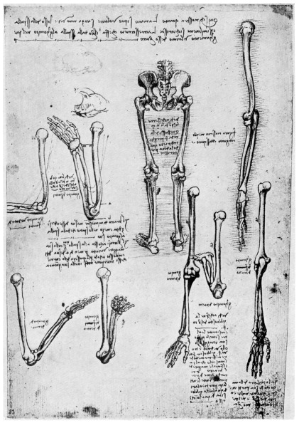 Biology「Study of human bones, late 15th or 16th century (1954).Artist: Leonardo da Vinci」:写真・画像(5)[壁紙.com]