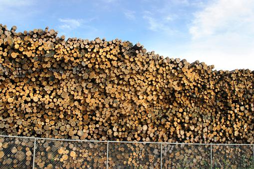 Log「Pile of Logs at a Lumber Mill」:スマホ壁紙(16)