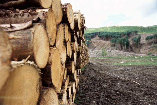 Deforestation「Pile of Logs in Cleared Woodland, Perthshire, Scotland」:スマホ壁紙(16)