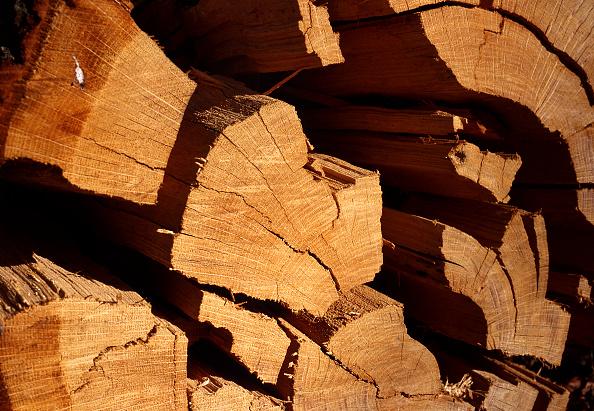 Print Collector「A Pile of Logs」:写真・画像(11)[壁紙.com]