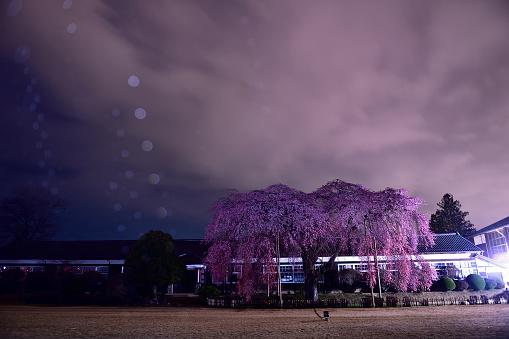 夜桜「Night View of School」:スマホ壁紙(18)