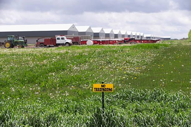 Bird Flu Outbreak Threatens Iowa's Chicken Farm Industry:ニュース(壁紙.com)