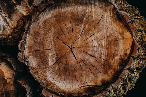 Tree Ring「Texture of wooden log」:スマホ壁紙(13)