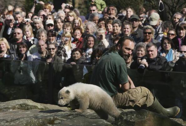 Bear Cub「Polar Cub Knut Draws Eager Public」:写真・画像(18)[壁紙.com]