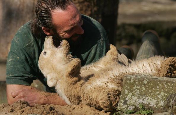 Bear Cub「Polar Cub Knut Draws Eager Public」:写真・画像(15)[壁紙.com]