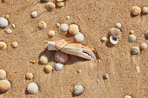 Photoshot「Ocean Sands」:スマホ壁紙(9)