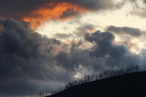 Burnt「Montana Forests Struggle With Climate Change」:写真・画像(17)[壁紙.com]