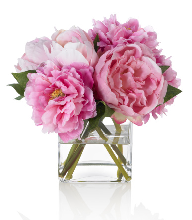 Pink Color「Pink Peonies on white background」:スマホ壁紙(18)