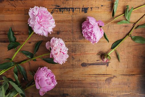 Peony「Pink peonies on wood」:スマホ壁紙(15)
