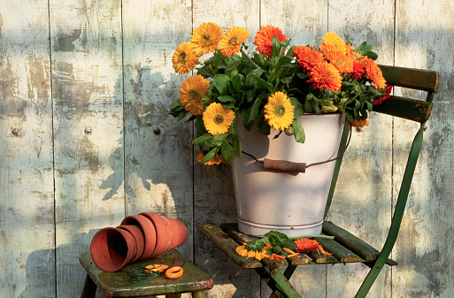 Bucket「Still Life with Orange and Yellow Marigolds」:スマホ壁紙(9)