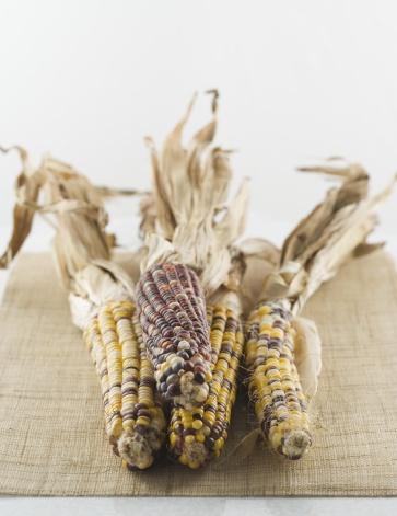 Indian Corn「Still life of Indian corn」:スマホ壁紙(9)