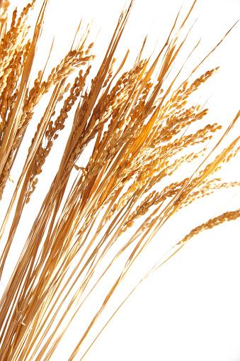 穀草「Still life of crops」:スマホ壁紙(8)