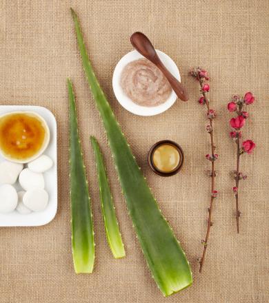 Feng Shui「Still life with aloe vera, honey, sugar scrub and flower」:スマホ壁紙(10)