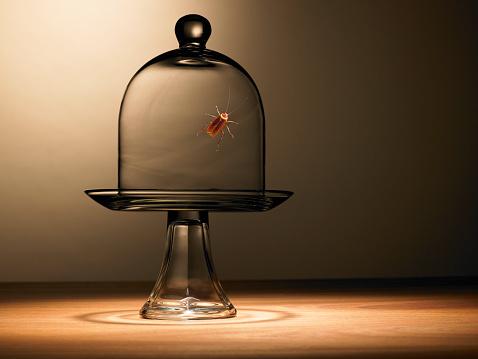 虫・昆虫「ゴキブリのベル瓶」:スマホ壁紙(19)