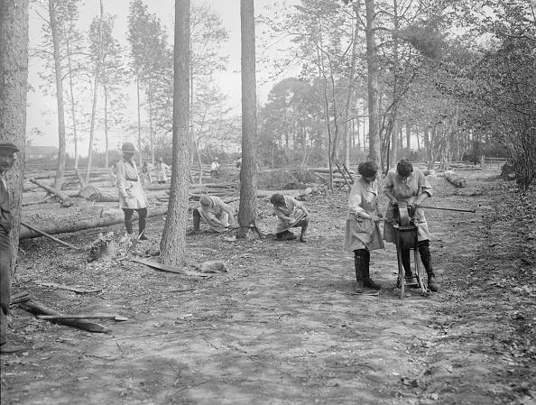 Sharpening「Tree 'Fellers'」:写真・画像(5)[壁紙.com]