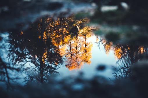 落葉樹「水の秋の反射」:スマホ壁紙(17)