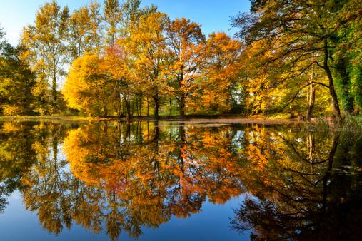 Variegated Foliage「Autumn Reflection」:スマホ壁紙(17)