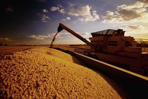 1990-1999「Soybean Harvest」:スマホ壁紙(4)