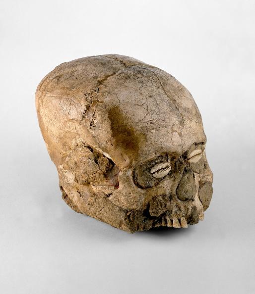 殻「Skull (Jericho Skull)」:写真・画像(17)[壁紙.com]