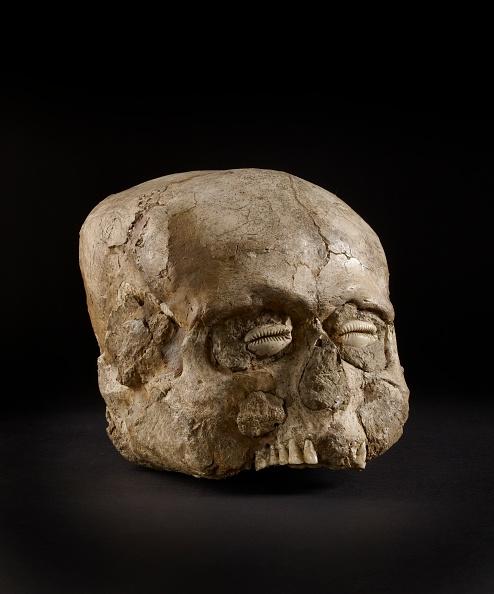 殻「Skull (Jericho Skull)」:写真・画像(18)[壁紙.com]
