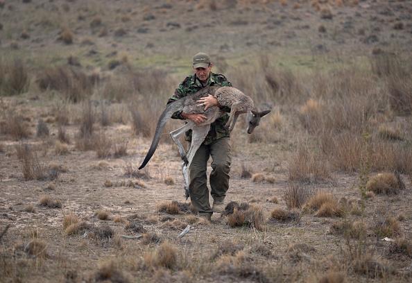 Animal「The Survivors: Saving Australian Wildlife Following Fires And Drought」:写真・画像(14)[壁紙.com]