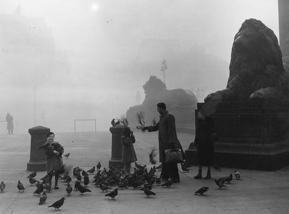 Fog「Feeding Pigeons」:写真・画像(7)[壁紙.com]