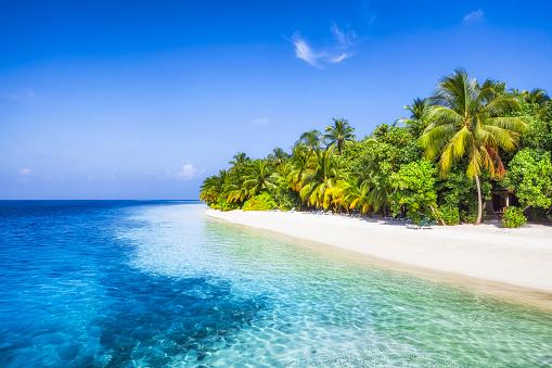 インド洋「パームビーチビーチ」:スマホ壁紙(10)