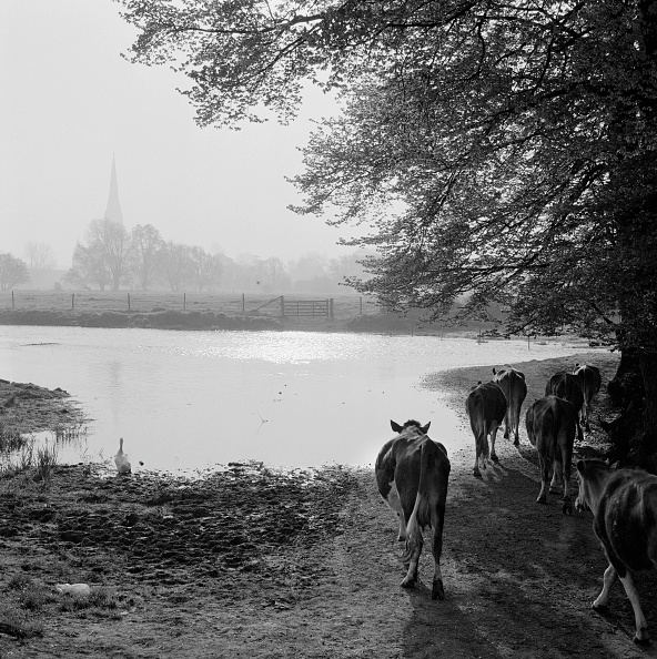 Salisbury Cathedral「Water Meadows」:写真・画像(18)[壁紙.com]