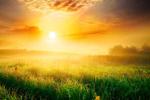 Farm「Colorful and Foggy Sunrise over Grassy Meadow - Landscape」:スマホ壁紙(3)